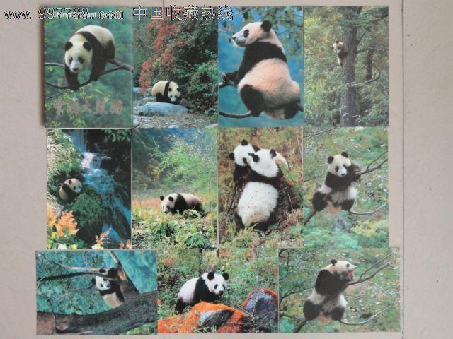动物类:1,《中国大熊猫》-明信片/邮资片--se12410498