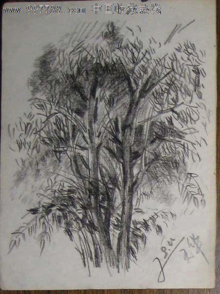 八十年代铅笔画速写——树(陈天华作品)