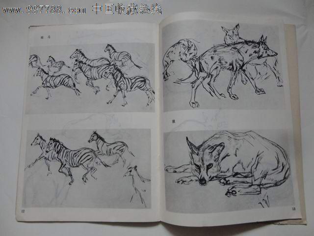 动物速写(袁熙坤作)