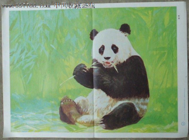 幼儿园常识教育挂图-野兽5.熊猫(沈绍伦画.11张一套)