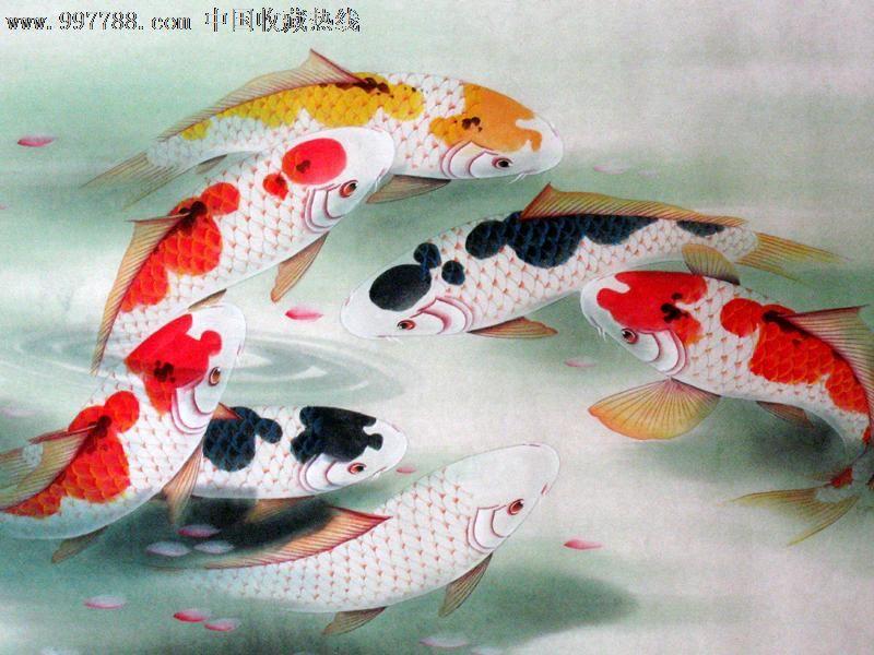 连年有余九鱼图客厅挂画四尺纯手绘22323