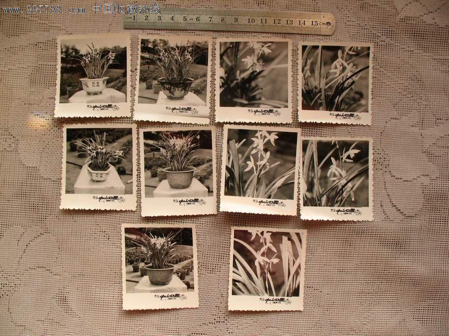 青岛中山公园兰花照片10张-se13330001-老照片-零售
