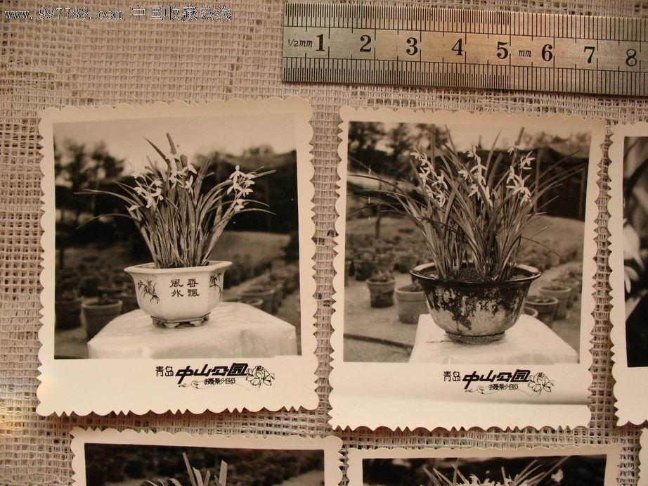 青岛中山公园兰花照片10张