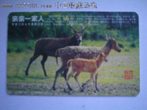 四不象动物生肖图106