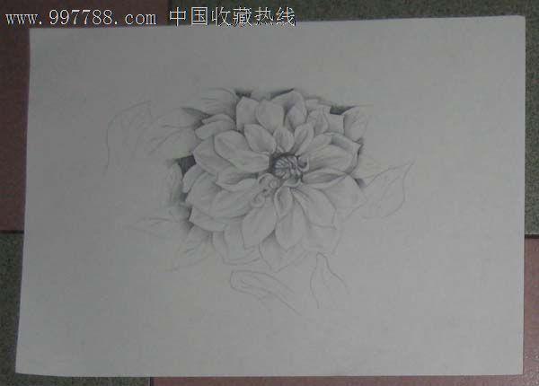 手绘素描花卉铅笔画