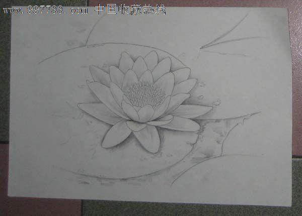 荷花铅笔手绘图片