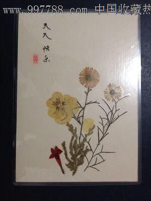 手工制作植物标本【天天快乐】