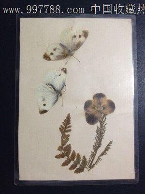 手工制作动植物标本【无题】_树叶/植物标本_蜀乡书院