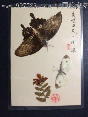 手工制作动植物标本【有毅力是一样浓】