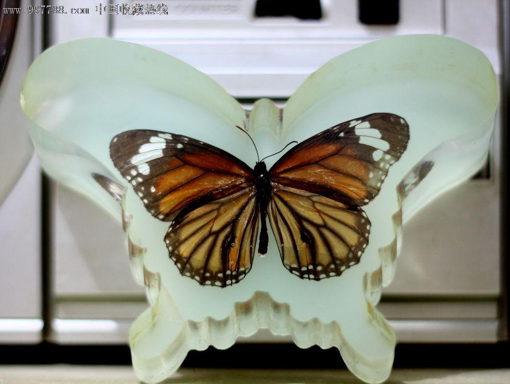 带夜光的蝴蝶标本摆件-树脂工艺品--se14977855-零售