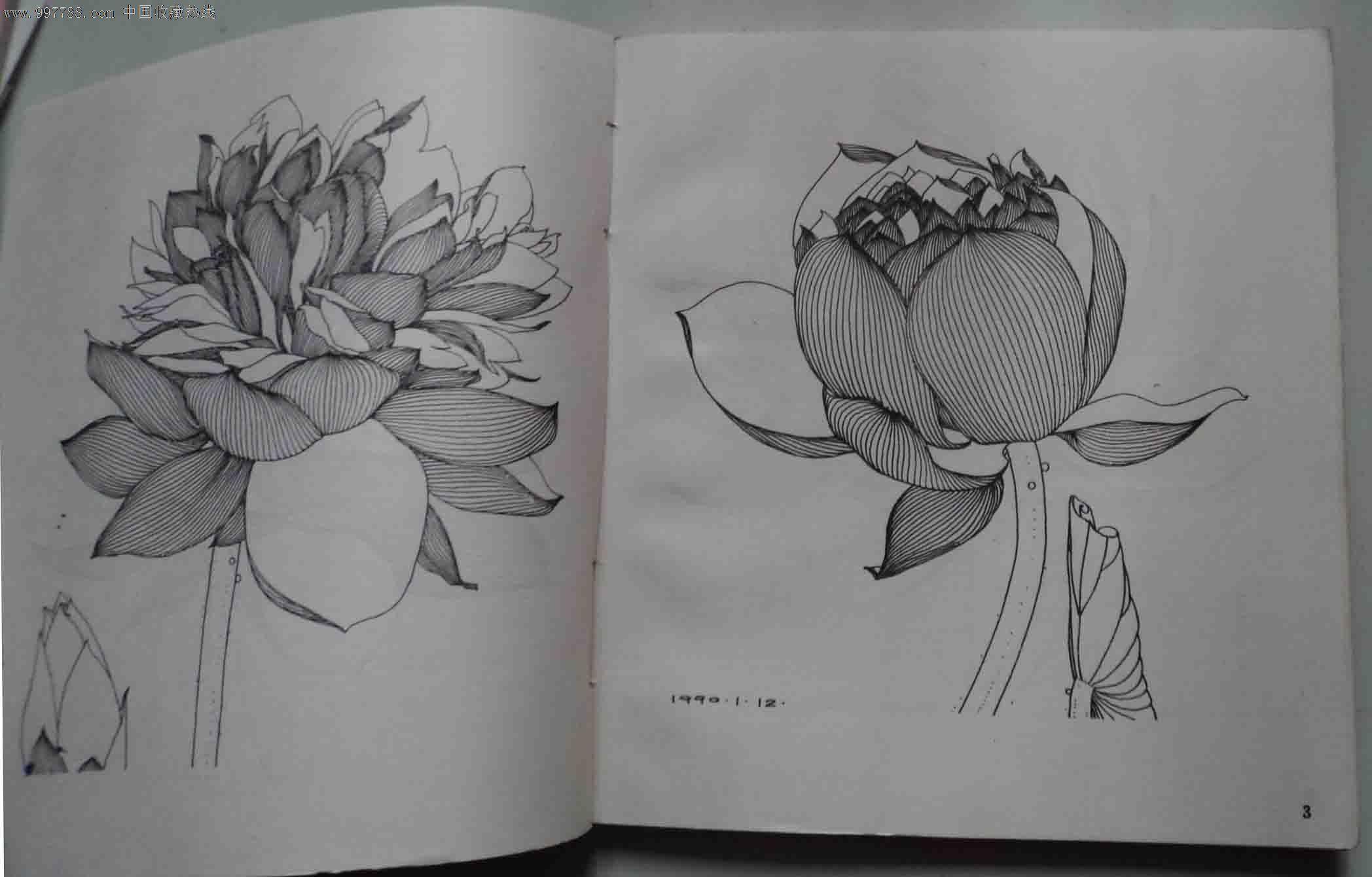 铅笔手绘莲花图片