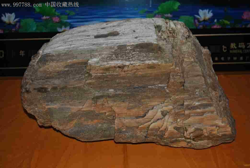 玛瑙状木化石,硅化木/木化石