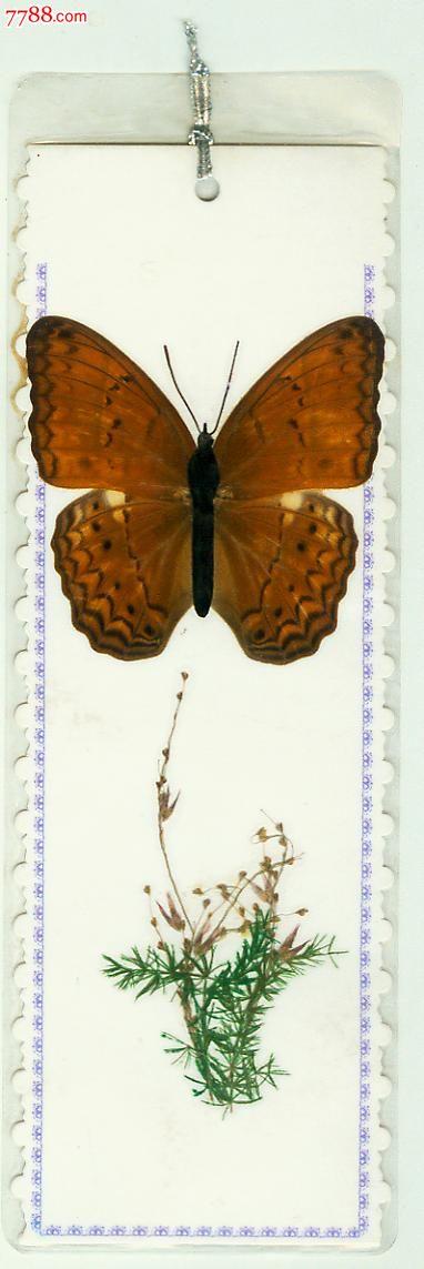 手绘昆虫动物书签