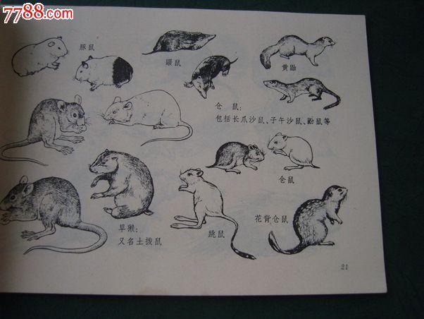 文革原版73年5月第一版【动物画参考资料】图,何进,任