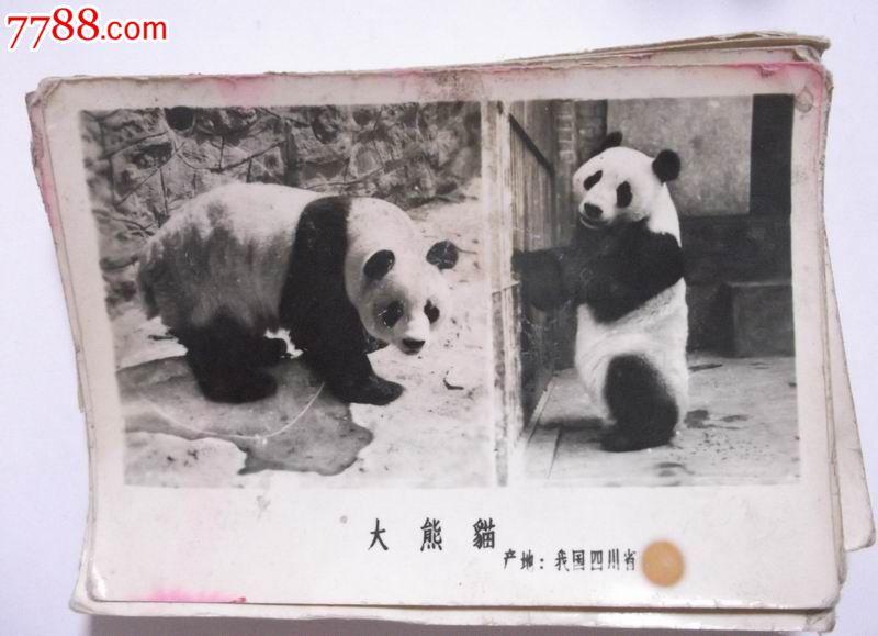 真实动物老照片