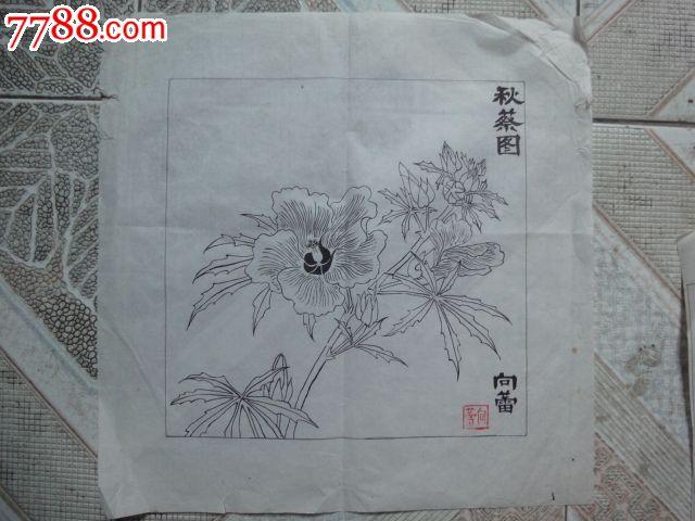 向雷画秋葵图(规格:33.5cm×33.5cm)