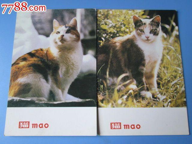 猫--动物明信片/(5张)英文