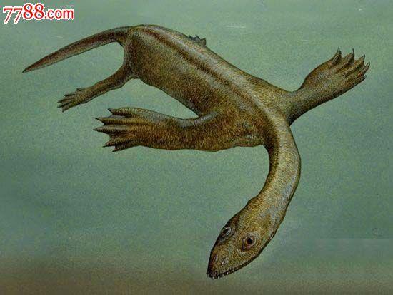 海生掠食性动物化石三叠纪时期生长在海中捕鱼21cm长4