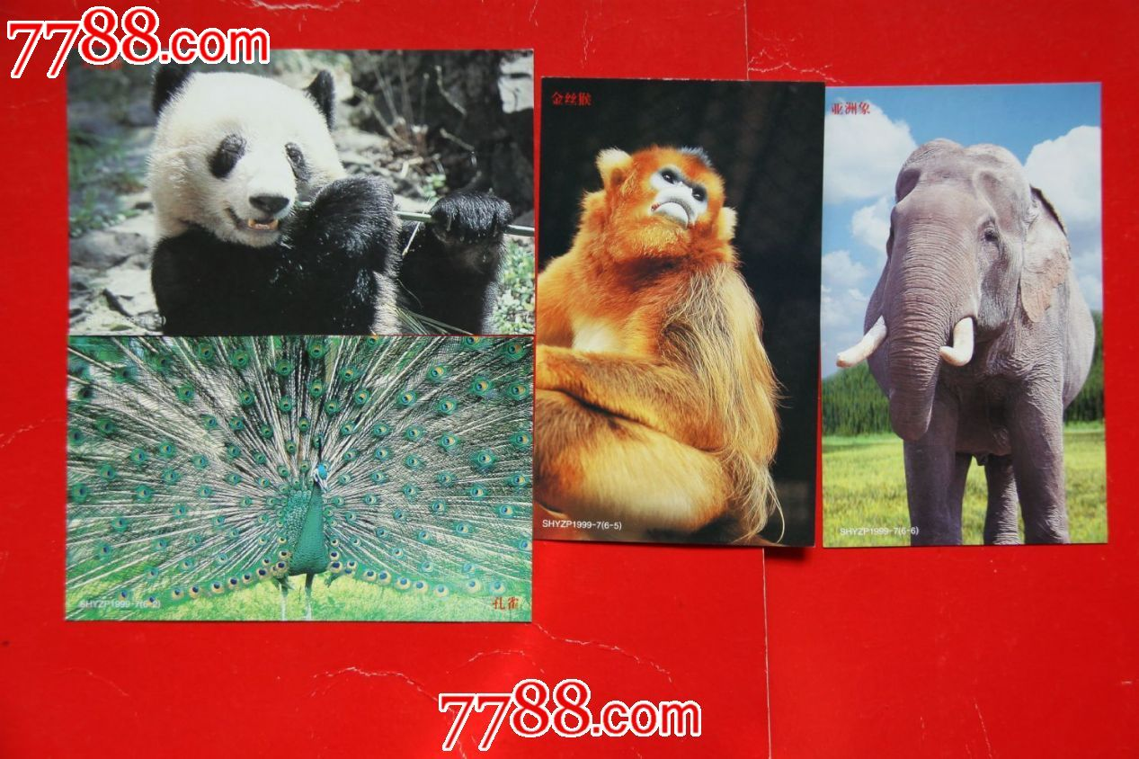 上海动物园明信片