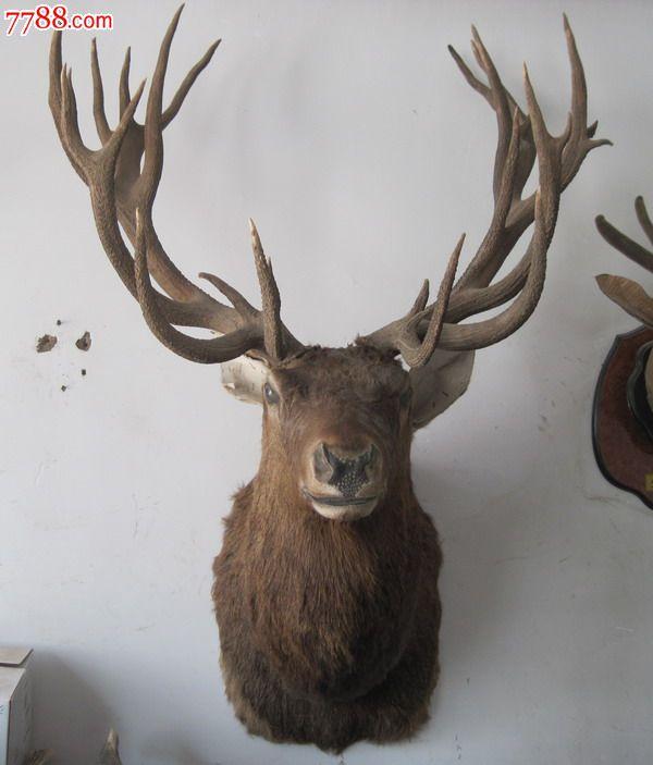 长脖进口鹿头标本欧式壁炉装饰品欧洲田园风格鹿头挂件鹿头标本图片