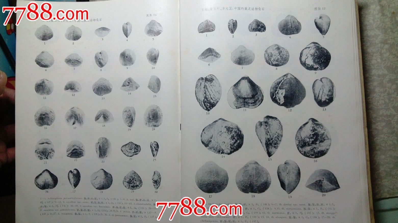 【中国的腕足动物化石】上下册.64年一版一印