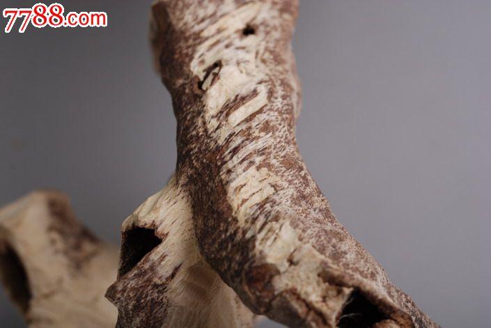 古人将沉香的形成原因分为4种:生结、熟结、脱落、虫漏,这几个名词在沉香领域是经常都会被提起的,而且被解释出来的意思也非常多。在《香乘》中有描述:熟结指的是香树因为自身的病变而引起树脂分泌导致结香,也就是说没有通过外力使香树受伤而结香,这样的就叫做熟结。生结就是指的通过人为手段使香树受伤,然后分泌树脂结出的香,目前海南沉大多都是生结,比如板头、壳沉;还有一种是因动物、自然灾害导致香树受伤而结香,这种结香的原理和生结一样,所以也被认为是生结,总的来说,生结就是指的外力导致香树受伤而结的香。脱落是指的香树死后,