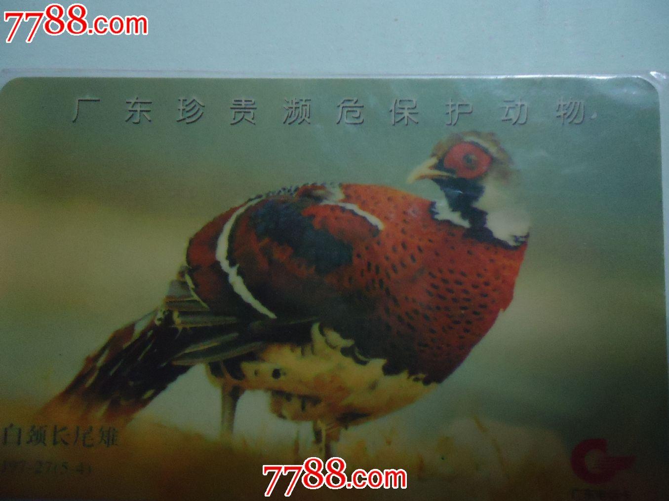 广东珍贵濒危保护动物