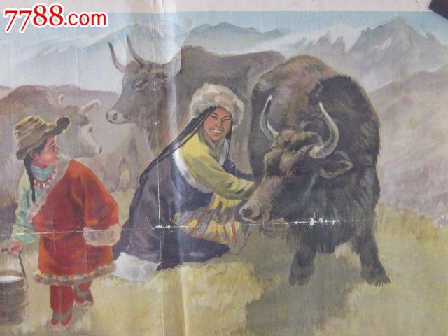 少見56個民族早期宣傳畫;63年介紹藏族宣傳畫的《擠牛奶》【有輕微