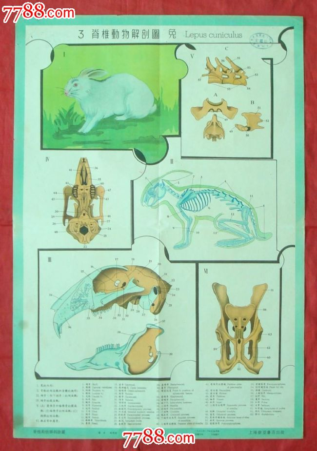 脊椎动物解剖图[3]