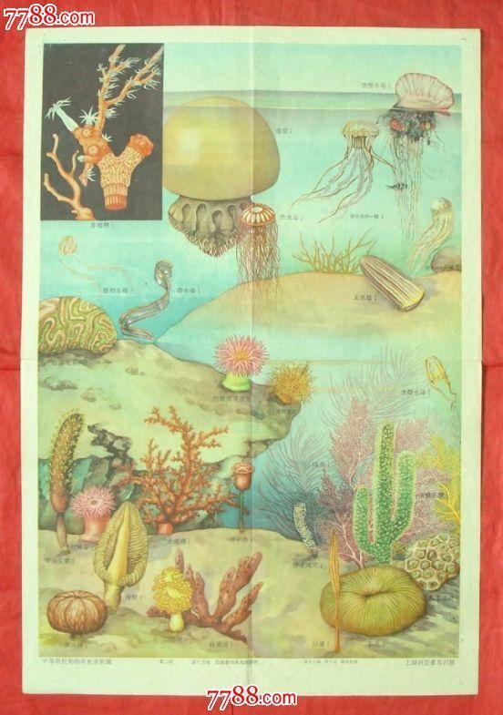 腔肠动物与海绵动物