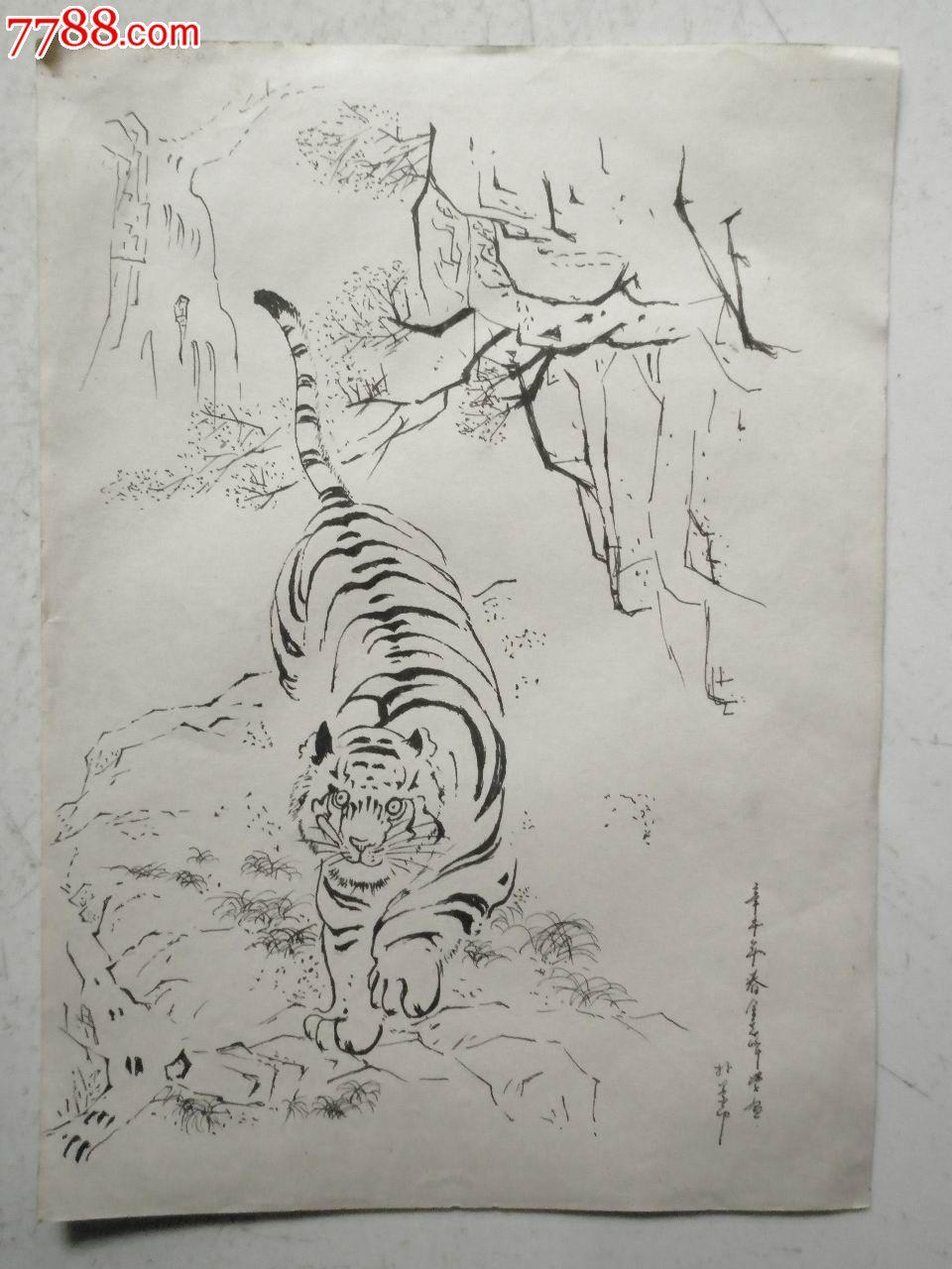 虎素描铅笔画-老虎画稿