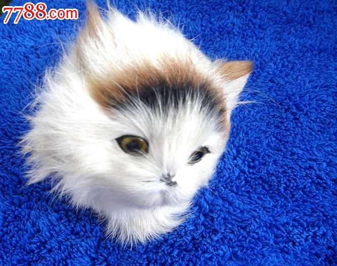 毛绒玩具白色可爱猫咪