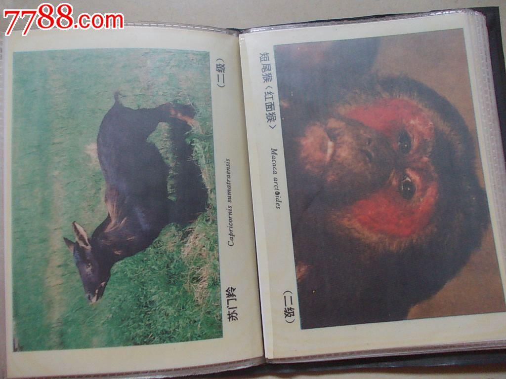 湖南省野生动物宣传图片