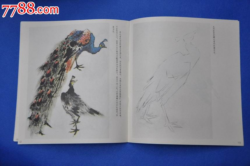 怎样画孔雀——中国画技法入门