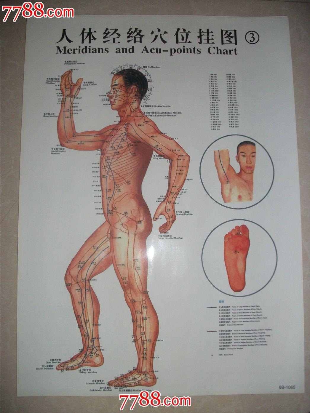 147人体高清套�_人体穴位图表【7张一套】